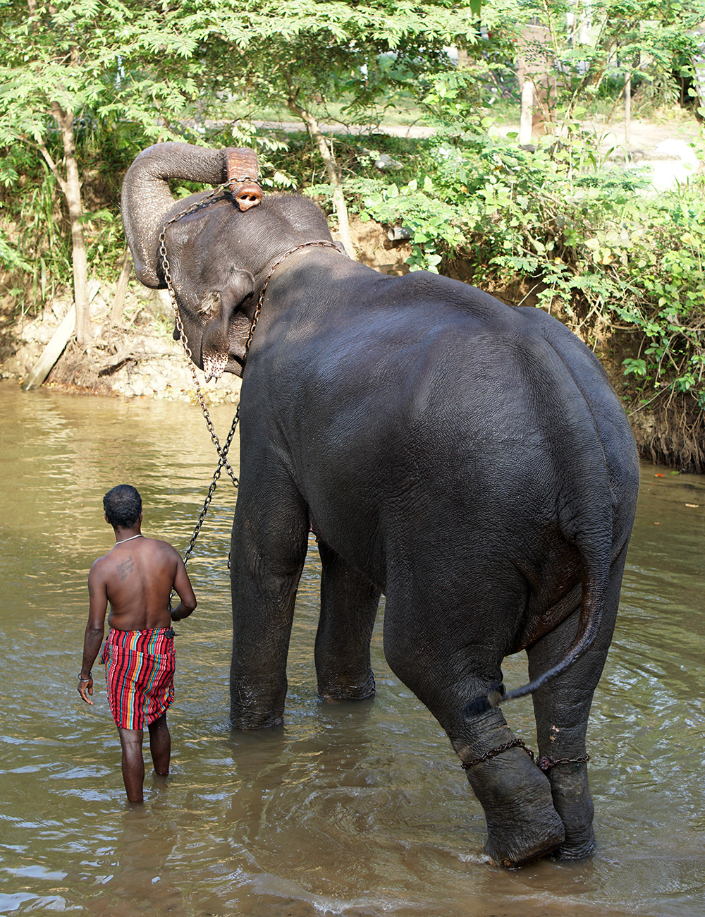 An elephant with owner in Sri Lanka.